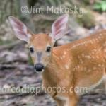 Fawn Ritchey Woods